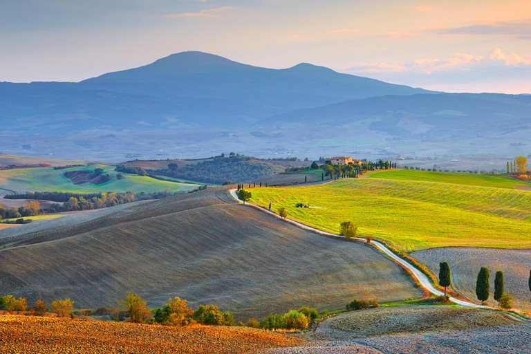 Cypress trees line roads in Val d'Orcia, Tuscany