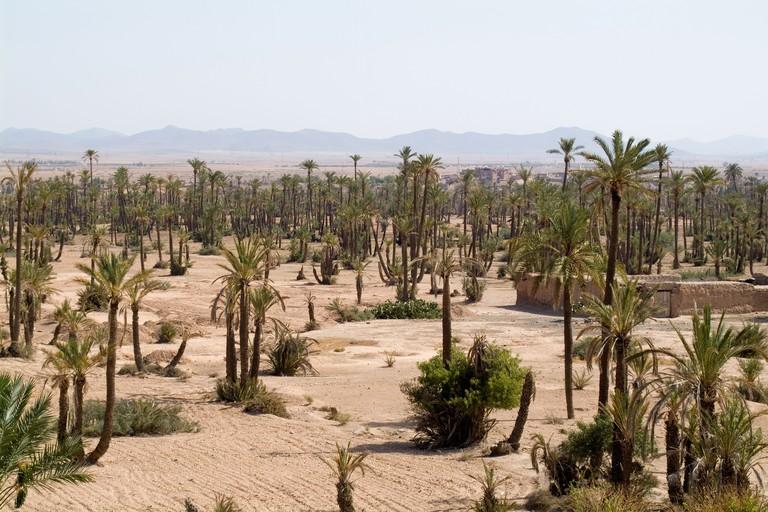 Palmeraie Marrakech, Morocco
