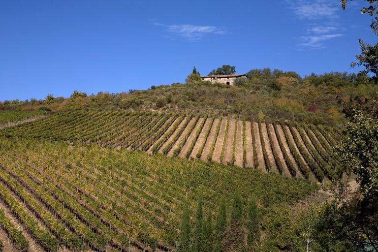Chianti Classico vineyards, Selvole, Province of Siena, Tuscany, Italy.