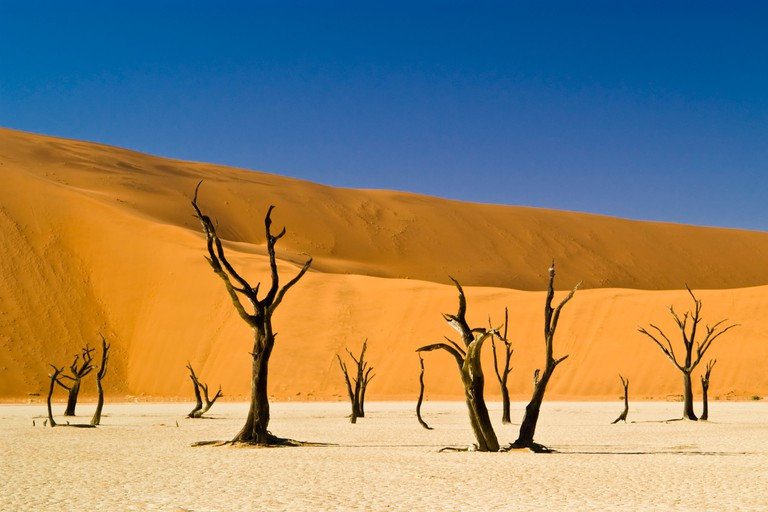 Dead trees, sand dunes and blue sky. Dead Vlei, Sossusvlei, Namibia. Image shot 2004. Exact date unknown.
