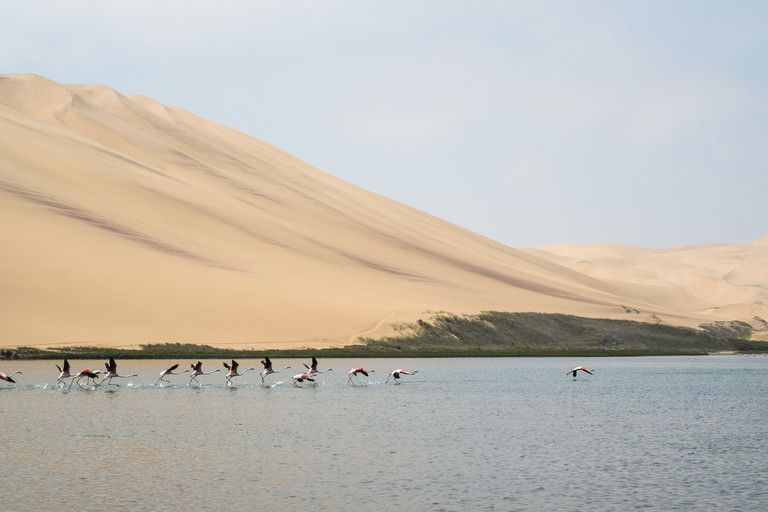 Flamingos, Sandwich Harbour, Namibia, Africa.. Image shot 01/2014. Exact date unknown.