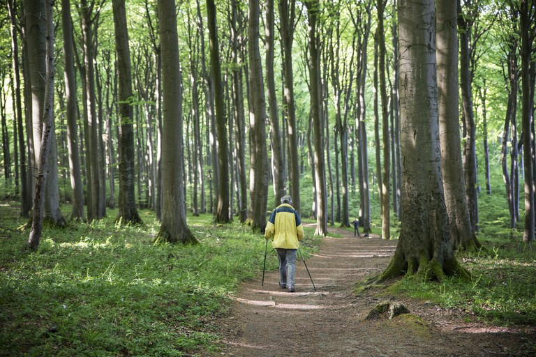 Hiker in beech forest on hiking trail in Germany
