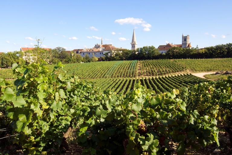 Clos de la Chainette vineyard and Saint Germain abbey in the town of Yonne, Auxerre