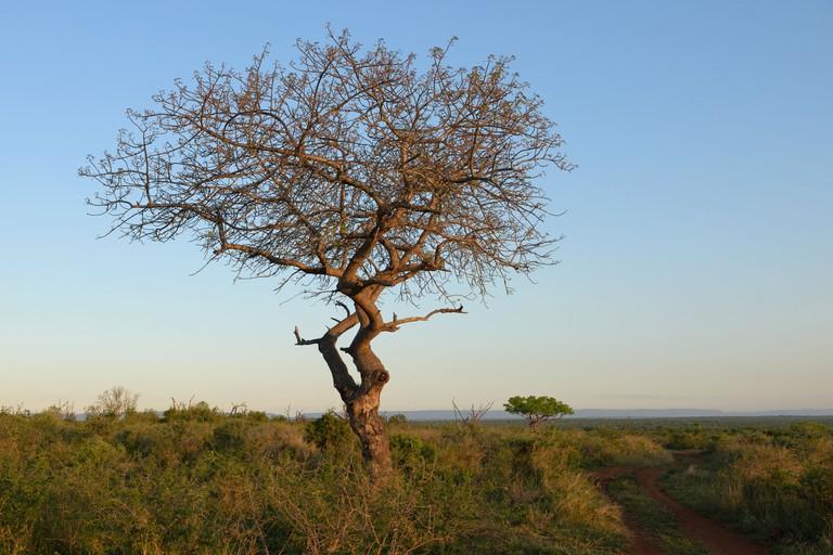 Sunset in Mkhaya Game Reserve.