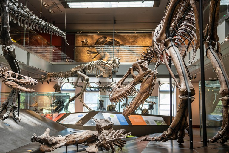 The Natural History Museum of Los Angeles County is the largest natural and historical museum in the western United States. Its collections include ne
