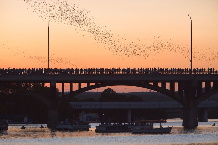 Austin, Texas Congress Bridge Bats Take in the phenomenal nightly bat display at Congress Bridge through March through to early fall