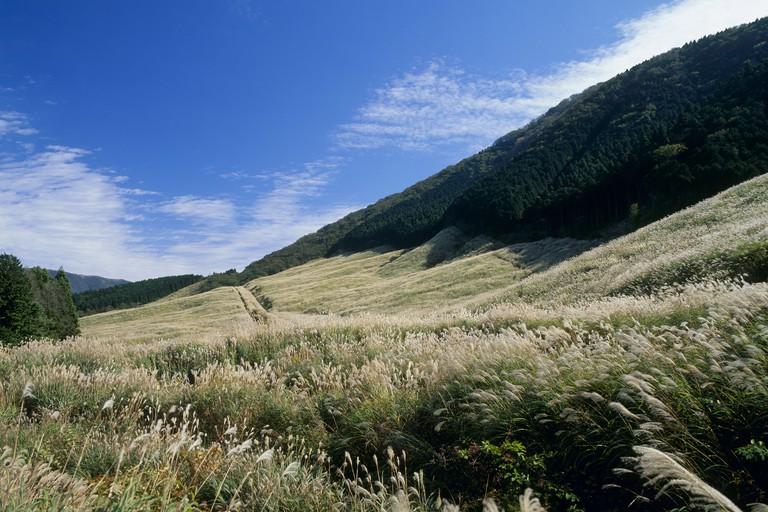 Pampas Grass Field of Sengokuhara, Hakone, Kanagawa, Japan