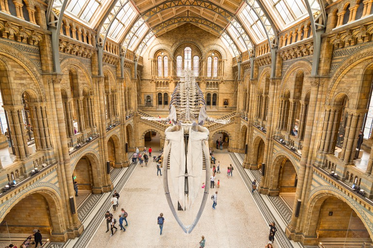 25-metre blue whale skeleton in the main hall of the Natural History Museum, London, UK