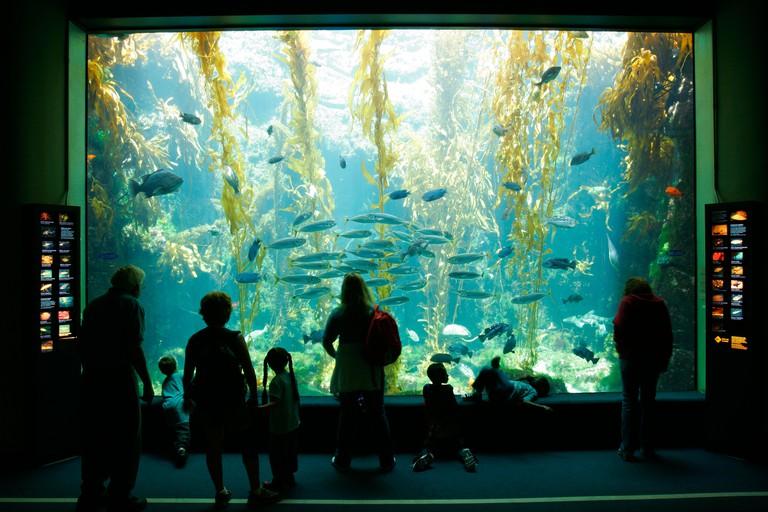Birch Aquarium At Scripps La Jolla California SD