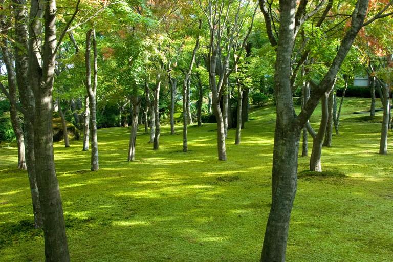 Moss garden, Hakone Museum of Art, Hakone, Japan.