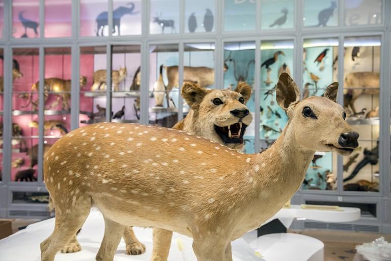 Muséum de Bordeaux – Sciences et Nature