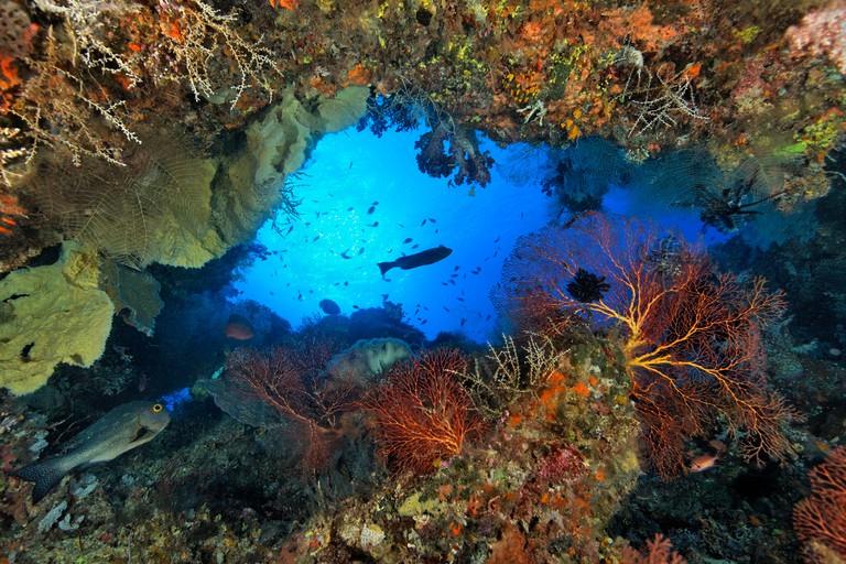 Coral Reef Swim Through, Kimbe Bay, New Britain, Papua New Guinea