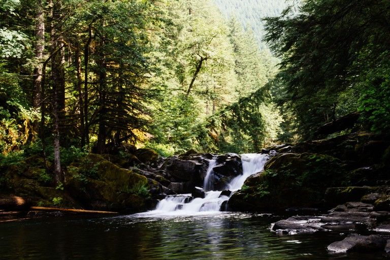 A beautiful shot of the Siouxon Creek Trail in the Gifford Pinchot National Forest in Washington DC