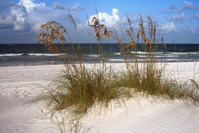 Sea oats and surf in Madeira Beach Florida on Florida's Gulf Coast.