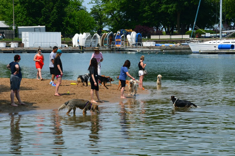Chicagoans provide some relief for their pets on a hot summer day at the Belmont Harbor Dog Beach.