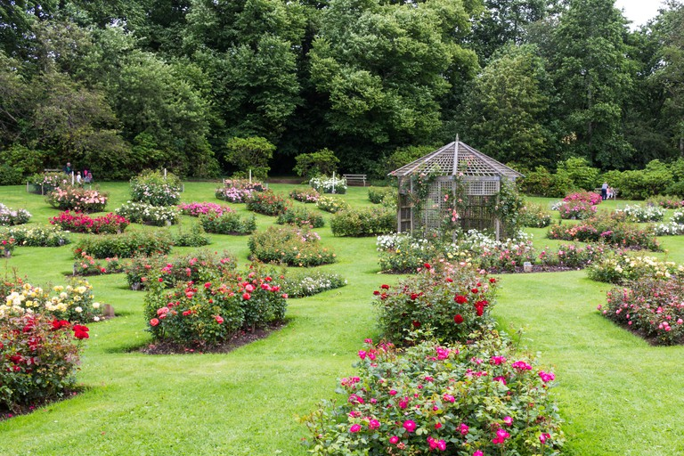 Numerous flower beds. Taken during Rose Week at Sir Thomas and Lady Dixon Park, South Belfast, N.Ireland.