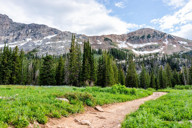 Albion Basin, Utah summer with landscape meadow view of dirt road trail in Wasatch mountains to Cecret Lake