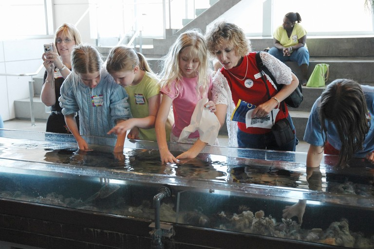 touch tank at Charleston Aquarium Charleston, South Carolina. Image shot 2005. Exact date unknown.