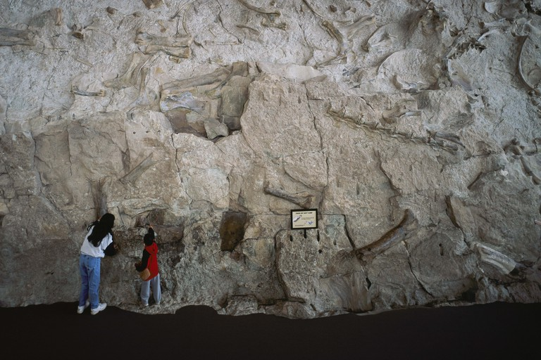 WALL EMBEDDED WITH PREHISTORIC FOSSILS IN THE DINOSAUR QUARRY OF THE DINOSAUR NATIONAL MONUMENT (Utah/Colorado). Jensen, Uintah County, Utah, USA.