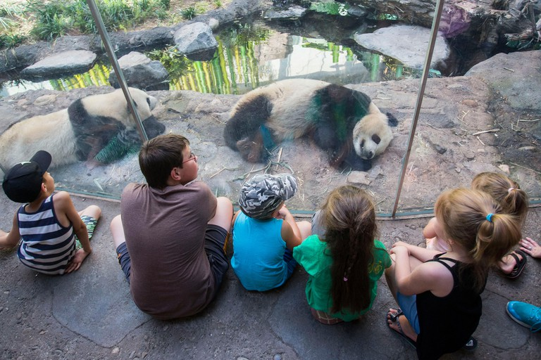 Calgary, Canada. 16th July, 2018. People visit Panda Passage at the Calgary Zoo in Calgary, Canada, on July 16, 2018. After moving to the Calgary Zoo from Toronto in March, giant panda cubs Jia Panpan, Jia Yueyue, their mother Er Shun and male adult giant