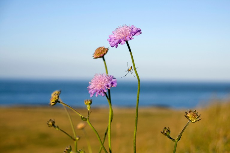 Wildflowers with spider and web, Killard point, Strangford Lough, County Down, Northern Ireland
