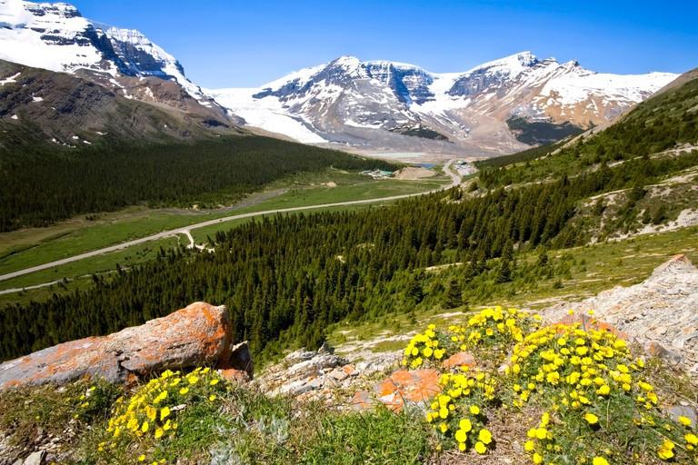 Icefields Parkway from Wilcox Pass, Jasper National Park, Alberta, Canada