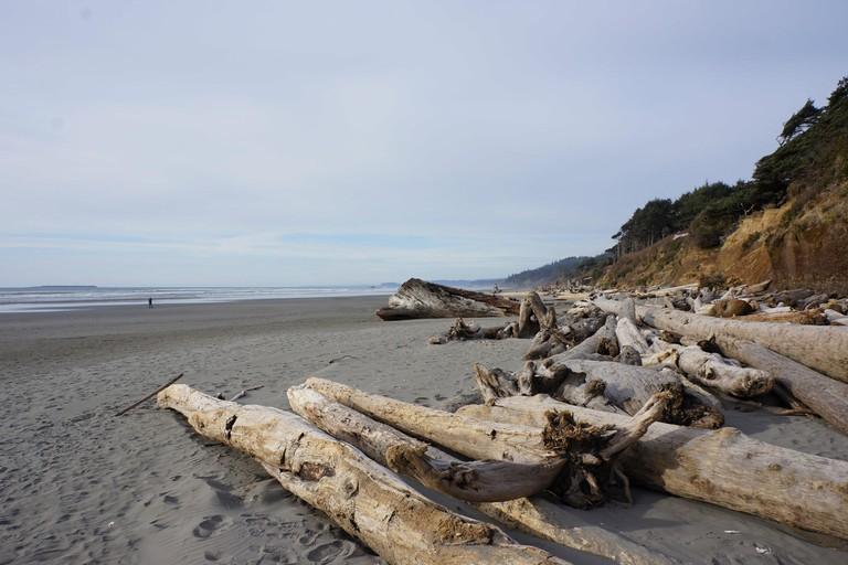 kalaloch campground beach driftwood logs coast.