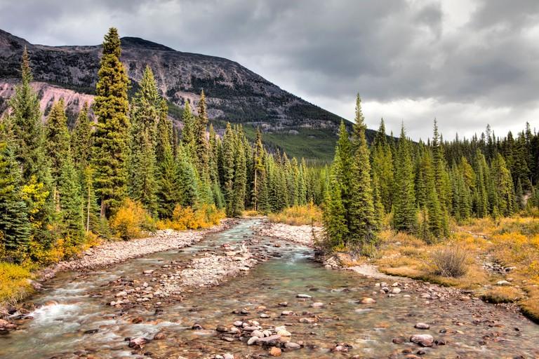 Poboktan Creek, Jasper National Park, Alberta, Canada
