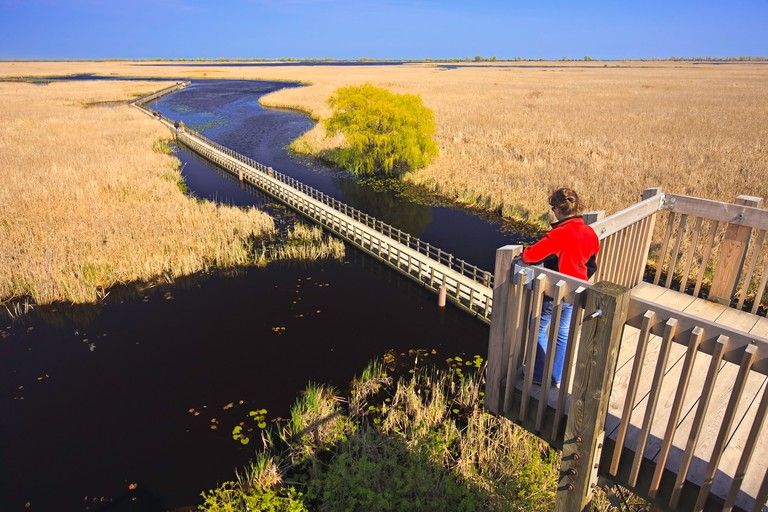 Tower at the Marsh Boardwalk in Point Pelee National Park Lake Erie Leamington Ontario Canada Model Released