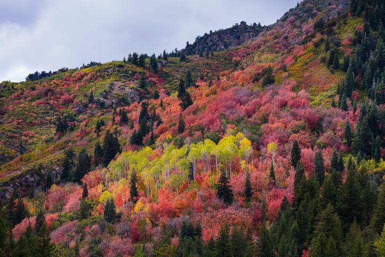 Forest in Autumn. Big Cottonwood Canyon, Wasatch Range, Salt Lake City, Utah, Usa, America.