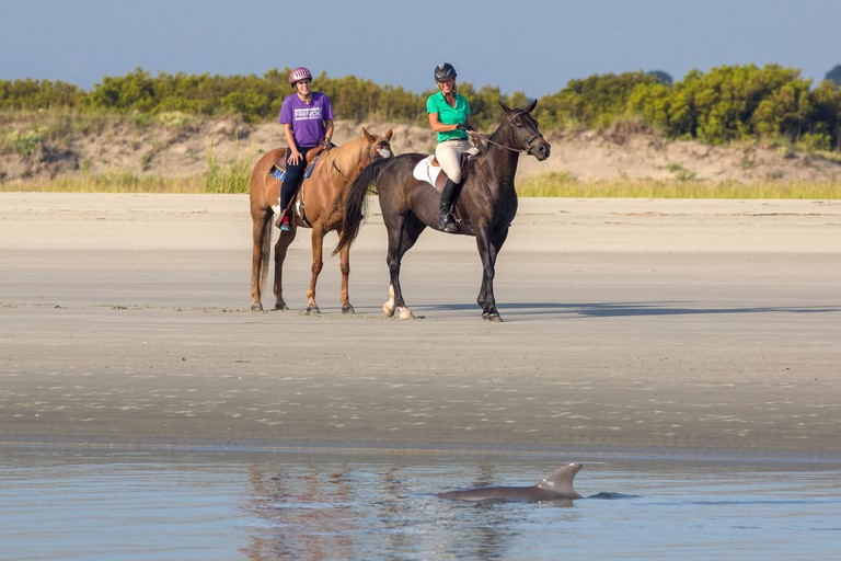 Tourists on horseback watch Atlantic bottlenose dolphins as they swim past during strand feeding at Captain Sam's Inlet September 3, 2014 in Seabrook Island, SC. This unusual practice involves a group of dolphins herding a school of fish onto the beach an