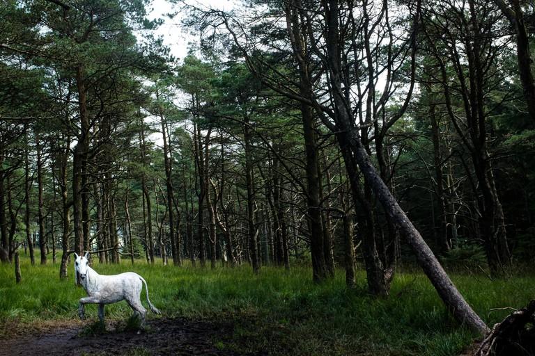 White Unicorn on the Pendle Sculpture trail, Aitken wood, Barley, Lancashire, UK