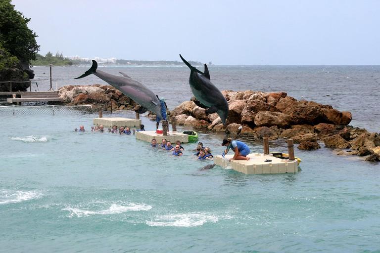 Dolphin Cove, Ocho Rios in Jamaica
