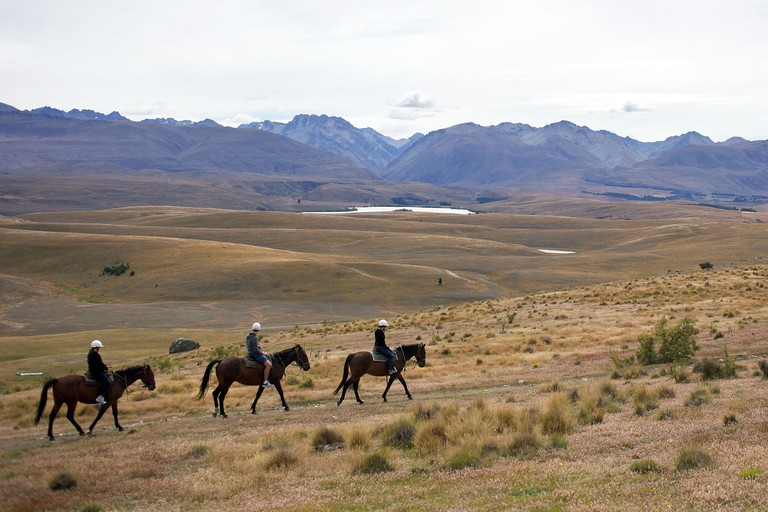 Horse trekking on top of Mount John overlooking Lake Tekapo and the Mackenzie Country, South Island, New Zealand.. Image shot 2011. Exact date unknown.