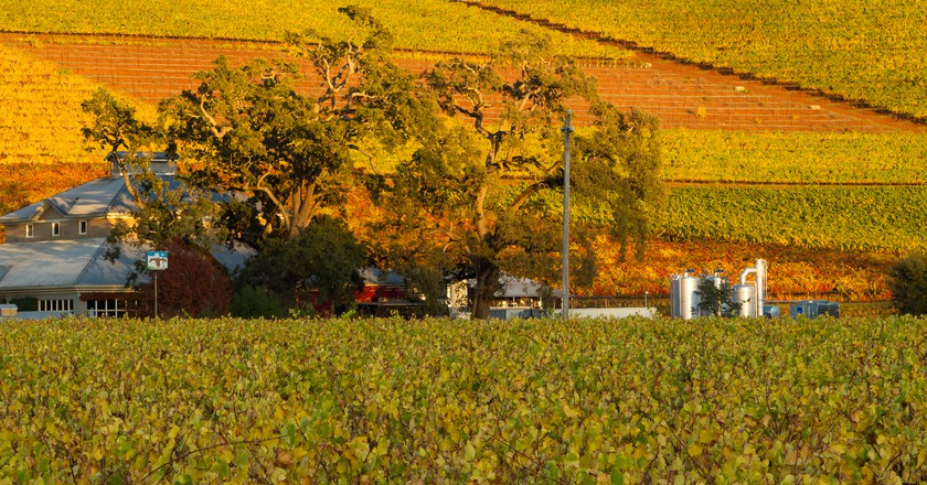 Sonoma County-Kunde Winery   ©  Frank Schulenburg/Flickr
