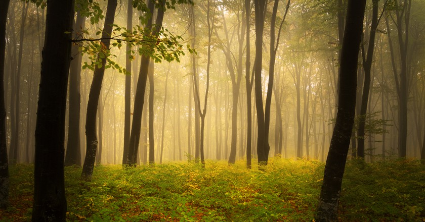 Germany's Schwarzwald (Black Forest) on a Autumns Day ©Tom Tom / Shutterstock