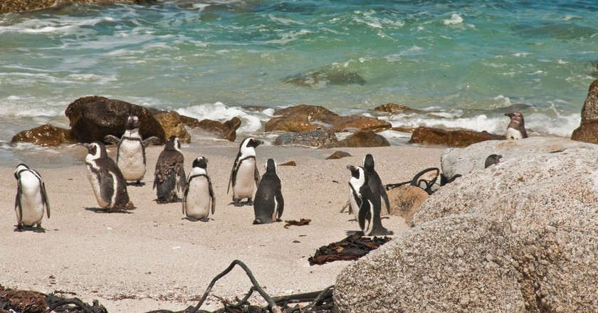 10 Top Things to Do in Cape Town