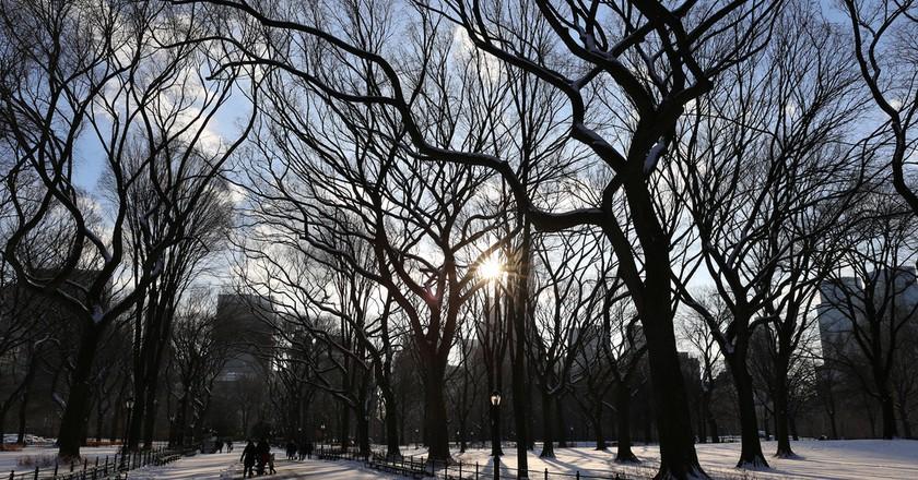 Central Park New York   © Mack Male/Flickr