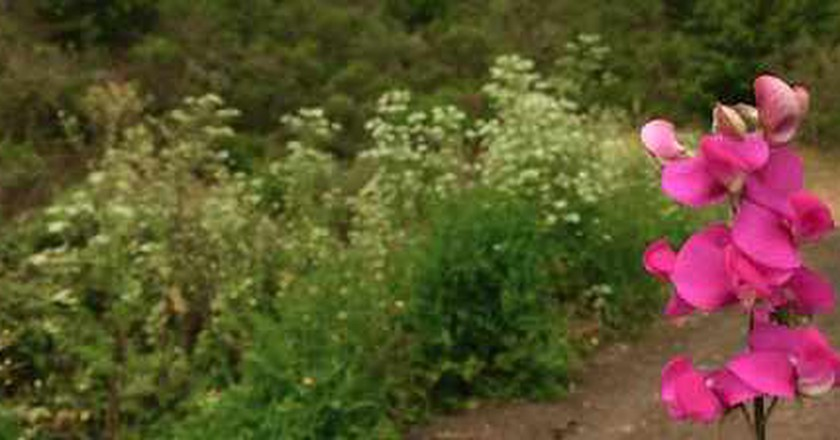 Spend A Day In The Beautiful Tilden Park