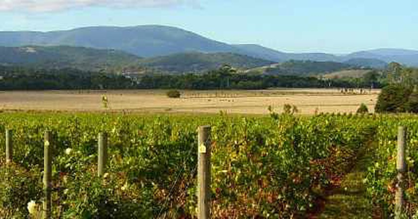 5 Best Wine Tastings In The Yarra Valley