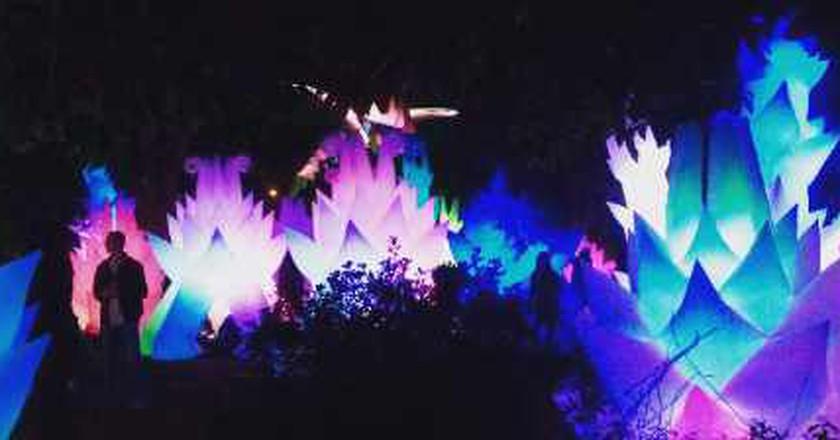Oakland Autumn Lights Festival 2015