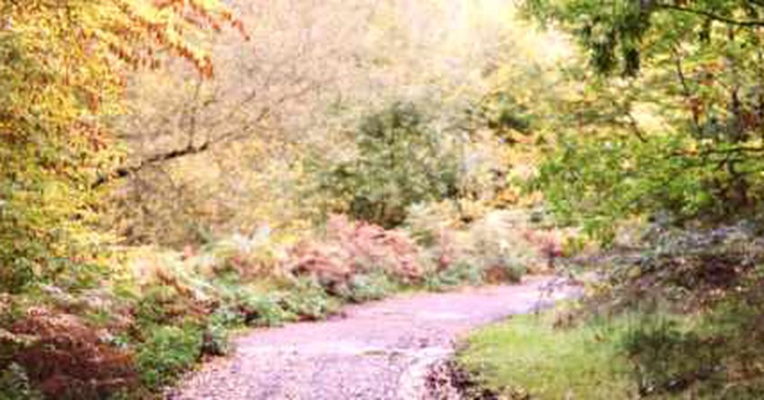Autumnal Adventures: Things To See And Do In London