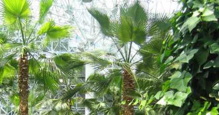 The Best Indoor Gardens In Chicago