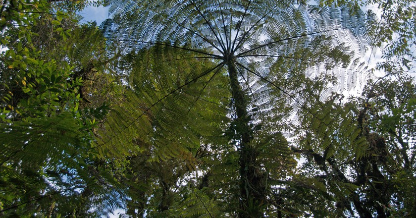 Fern Tree (Tapanti National Park) © Kathy & Sam/Flickr