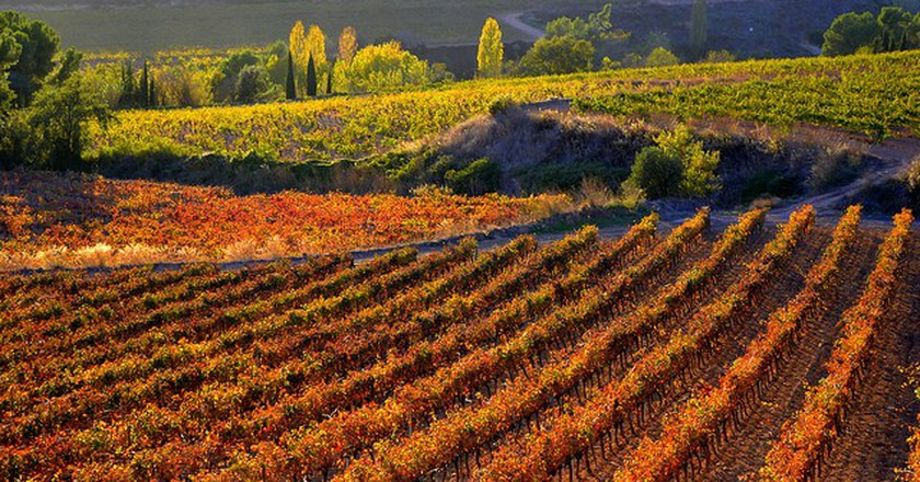 Vinyes de Santa Maria de Foix, el Penedes, Barcelona | © Angela Llop/Flickr