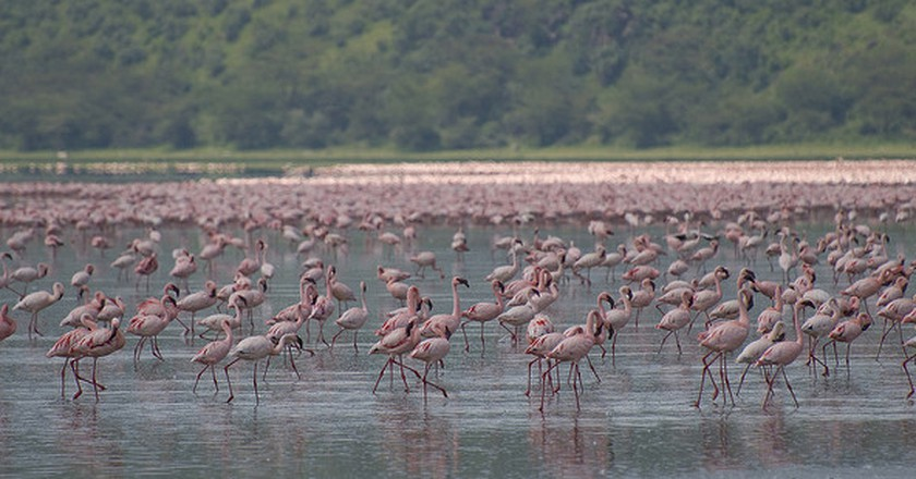 Lake Nakuru National Park | © Paul Mannix/Flickr