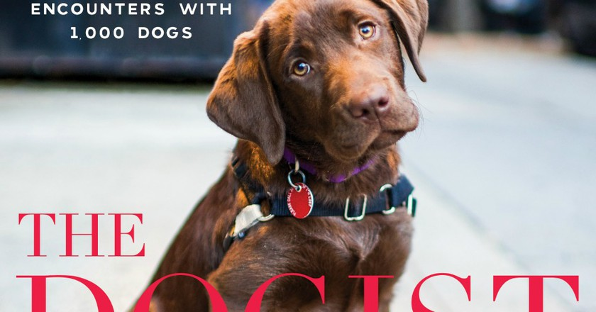 Cover.  Excerpted from The Dogist by Elias Weiss Friedman (Artisan Books). Copyright © 2015. Photographs by The Dogist, LLC.