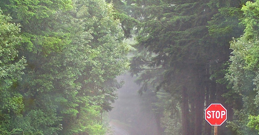 Foggy Road in Woodside California © Trace Nietert/Flickr
