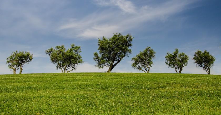 Trees | © Pixabay