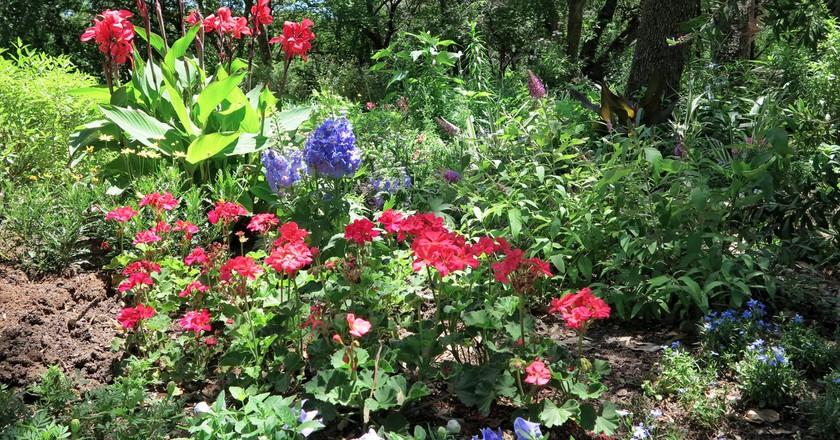 Beautiful Gardens In Austin | © Jenaveve Hunter